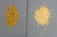 Raw vs. pelleted Bellis seed